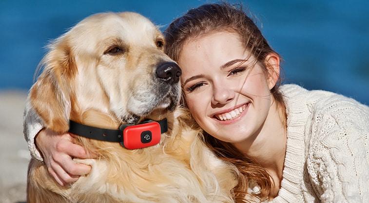 Top 10 Best Dog Shock Collars