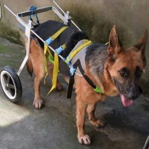 NewLife Mobility Adjustable Dog Wheelchair (L Size)