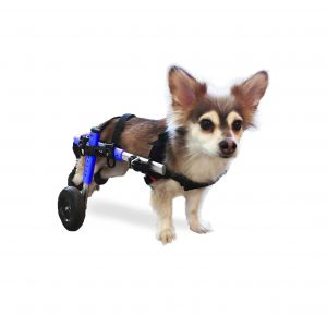 Walkin-Wheels-Dog-Wheelchair-–-For-Small-Dog