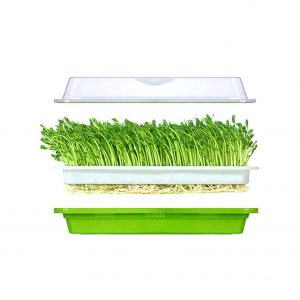 LeJoy Soil-Free Seed Sprouter Tray with Cover and Two Size Hole
